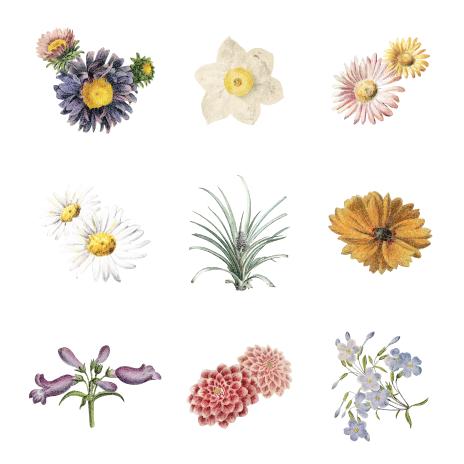 QuickScan - inventarisatie van aanwezige planten, vissen, zoogdieren en reptielen